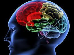 Il sistema Neurovegetativo Una Visione Osteopatica     IN FASE DI PROGRAMMAZIONE